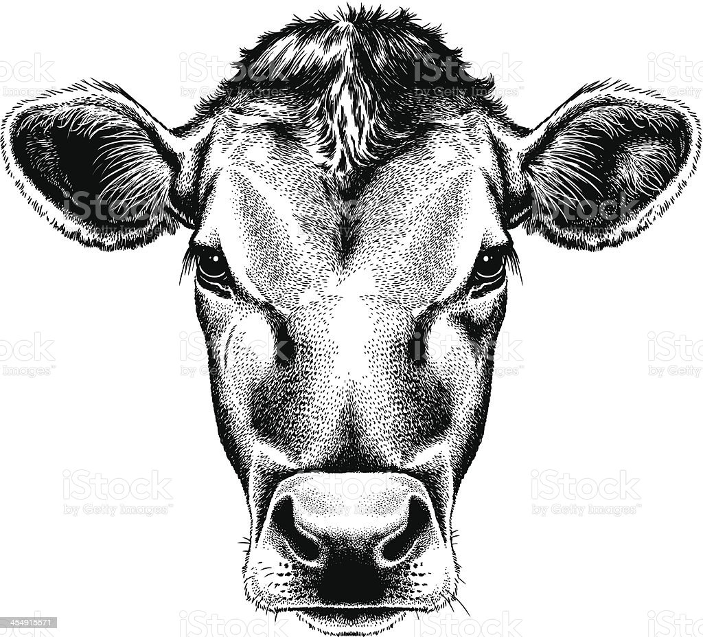 Vector illustration portrait of a cow's face vector art illustration
