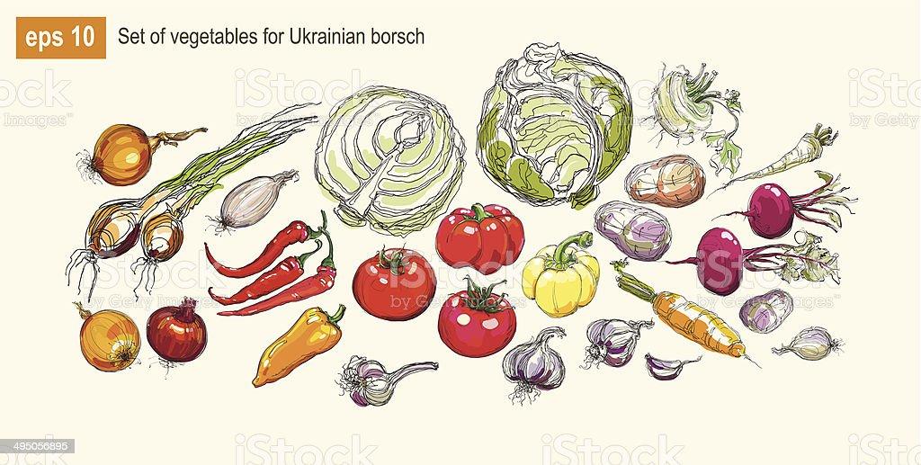 Vector illustration set of vegetables for Ukrainian borsch vector art illustration