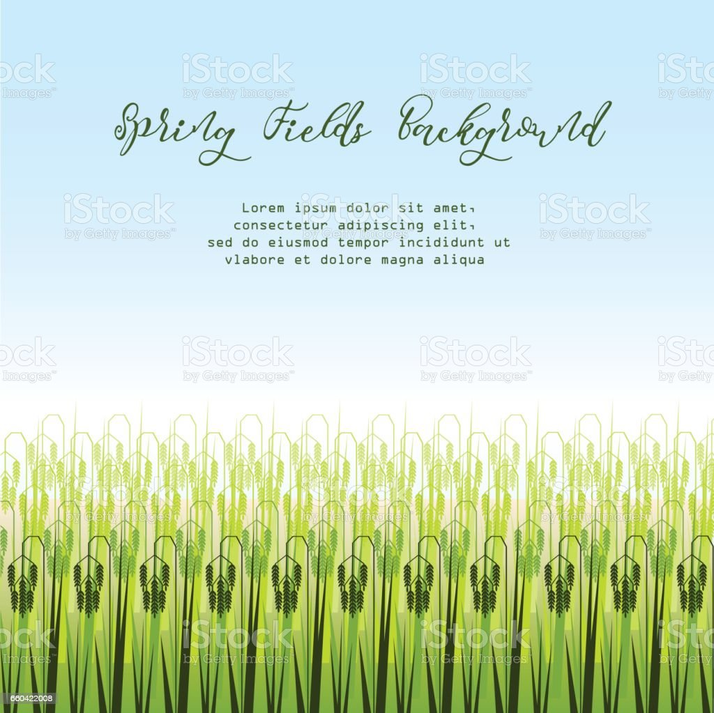 Vector illustration with stylized green rice paddy field. vector art illustration