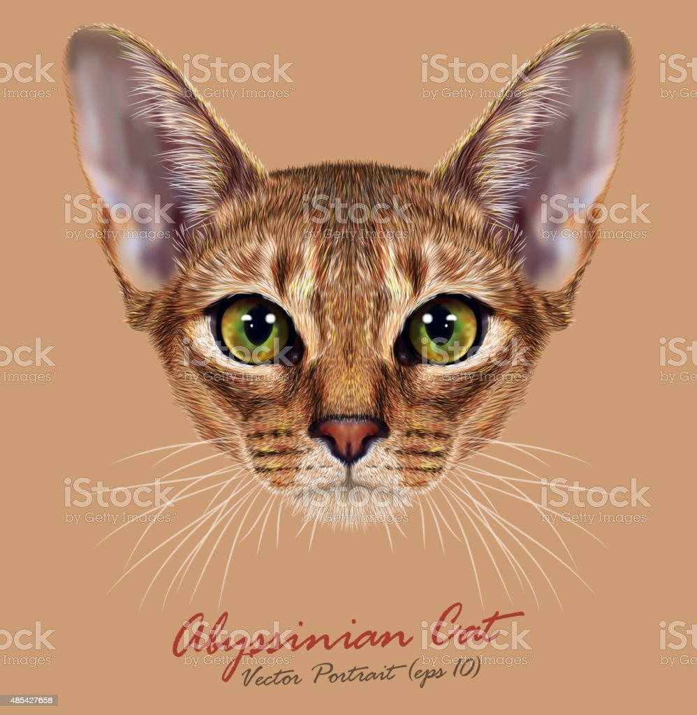 Vector Illustrative Portrait of Abyssinian Cat vector art illustration