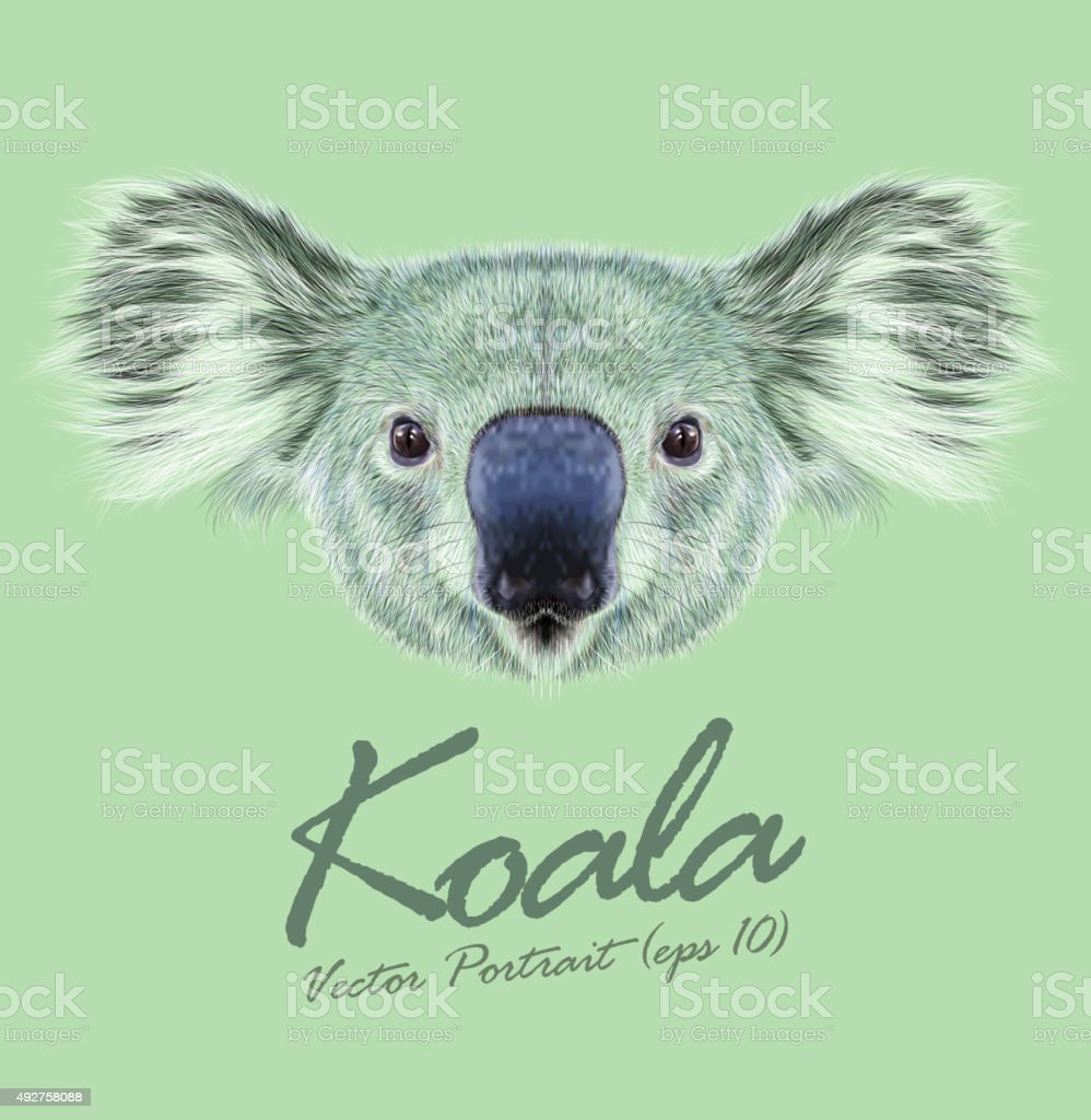 Vector Illustrative Portrait of Koala Bear vector art illustration