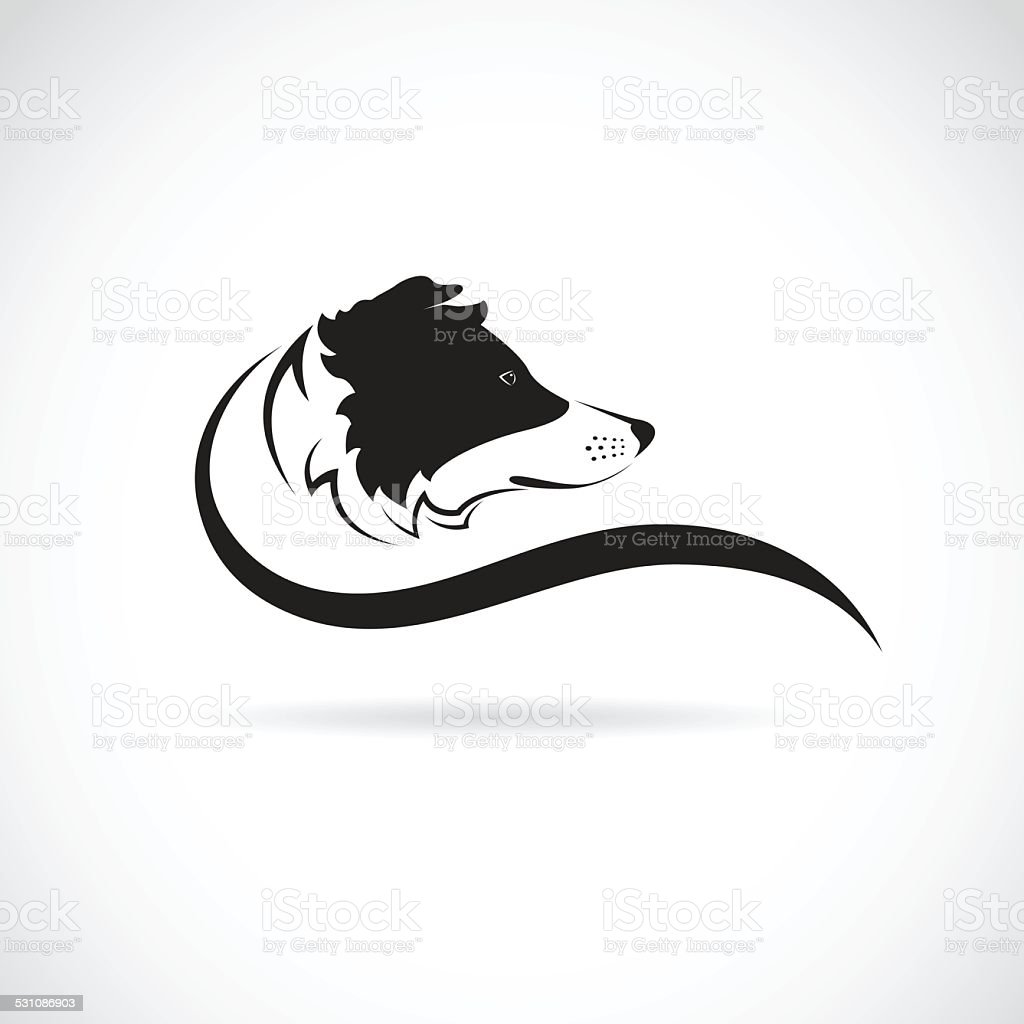 Vector image of an border collie dog vector art illustration