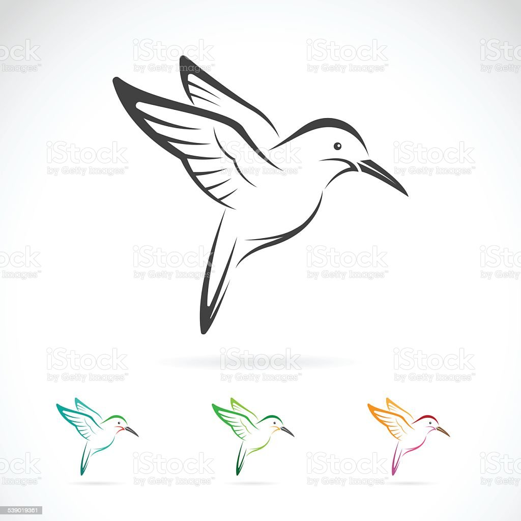 Vector image of an hummingbird design on white background vector art illustration