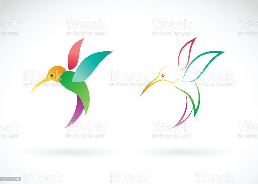 Vector image of an hummingbird design on white background. vector art illustration