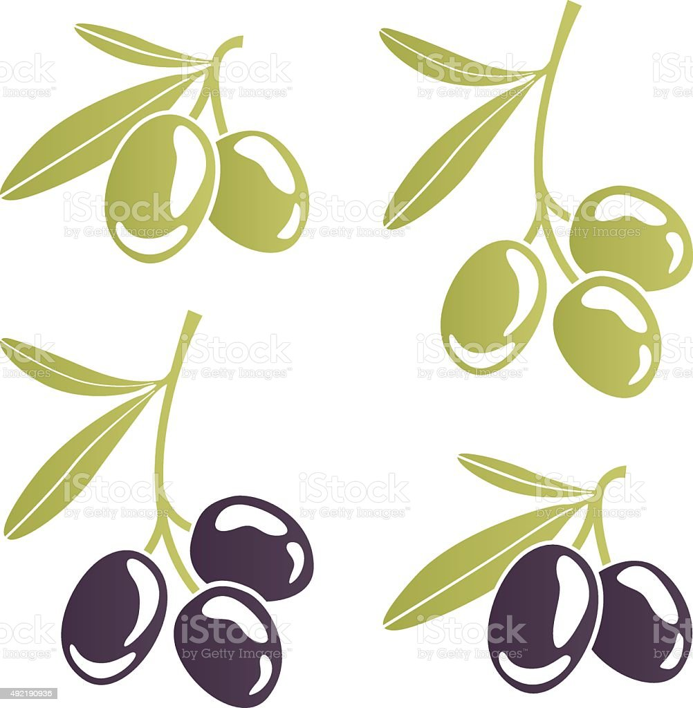 Vector image of stylized olive branches vector art illustration