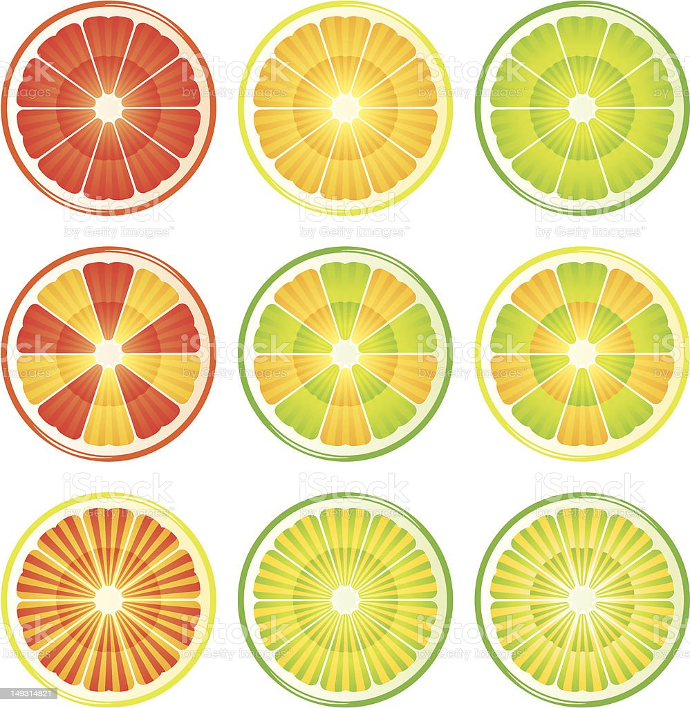Vector images of slices of citrus fruit royalty-free stock vector art