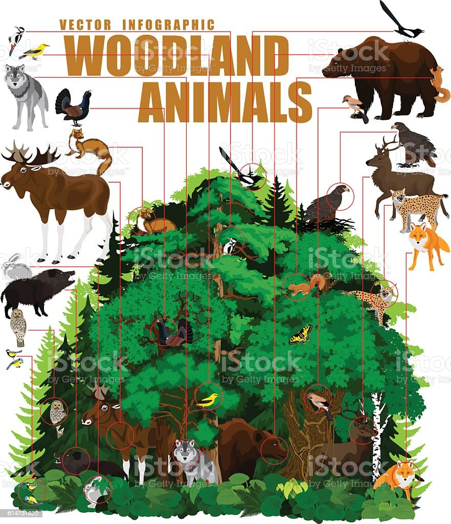 vector infographic - north woodland forest with animals vector art illustration