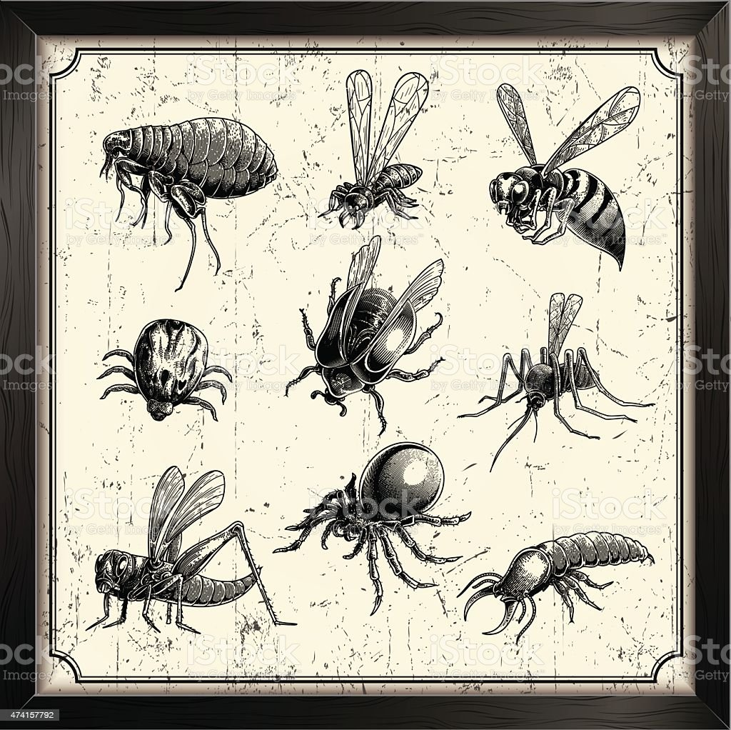 vector insects vector art illustration