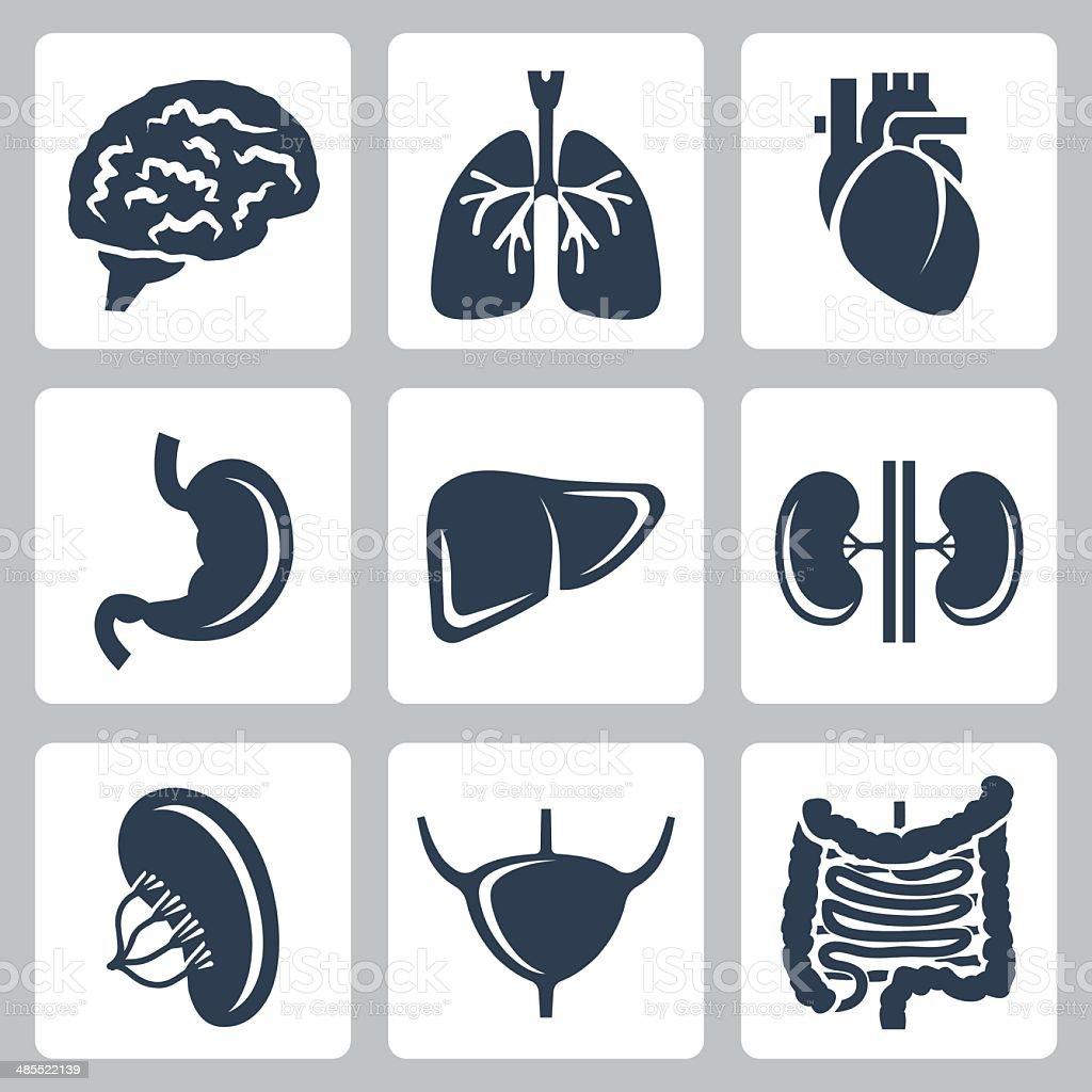 Vector internal organs icons set vector art illustration