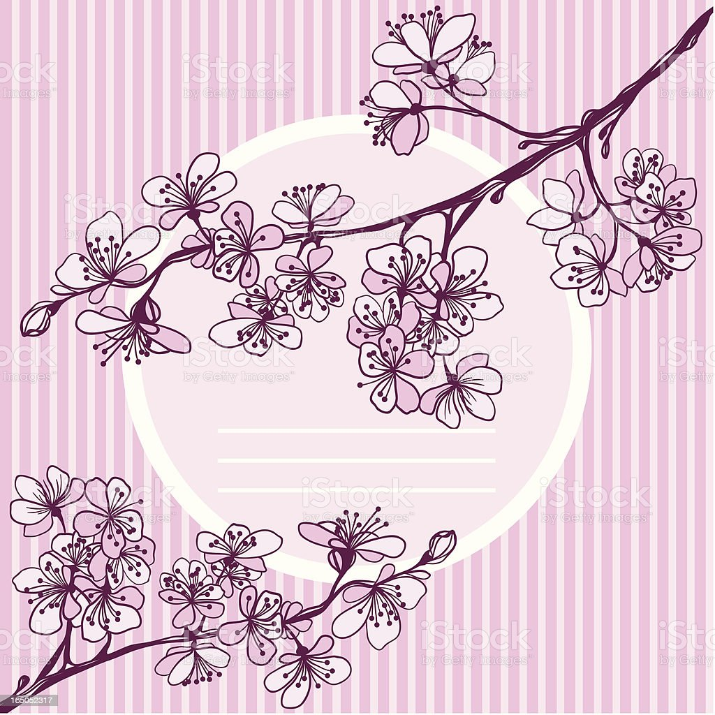 vector invitation or card from blossoming Japanese cherry royalty-free stock vector art