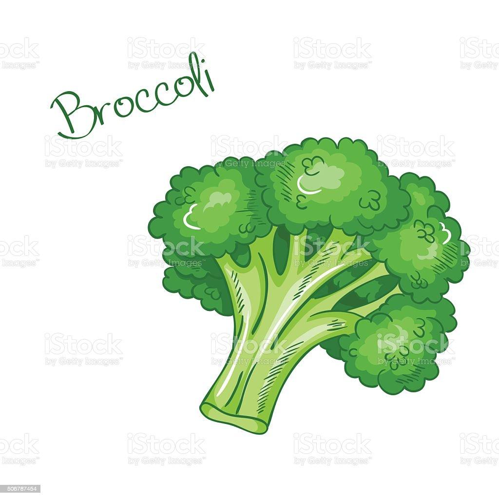 vector isolated cartoon fresh hand drawn broccoli. vector art illustration