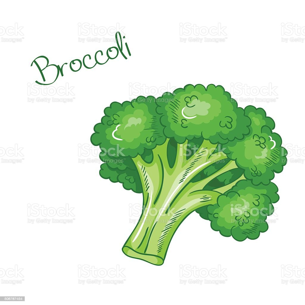 broccoli clip art  vector images   illustrations istock clip art lettuce leaves clipart lettuce