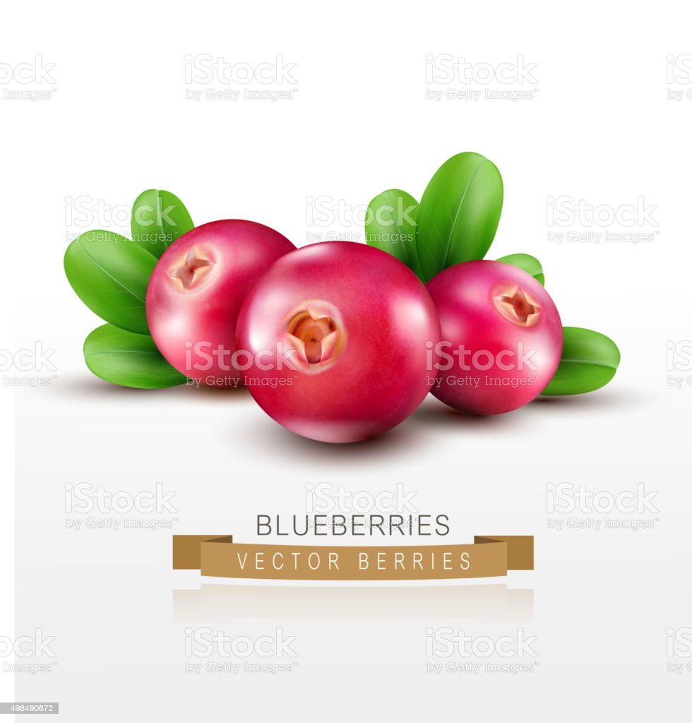 Vector isolated cranberries with green leaves on a white background vector art illustration