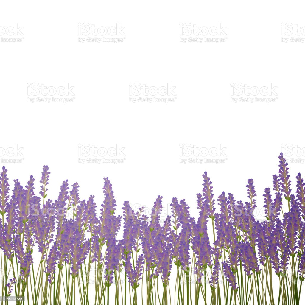 Vector Lavender Background royalty-free stock vector art