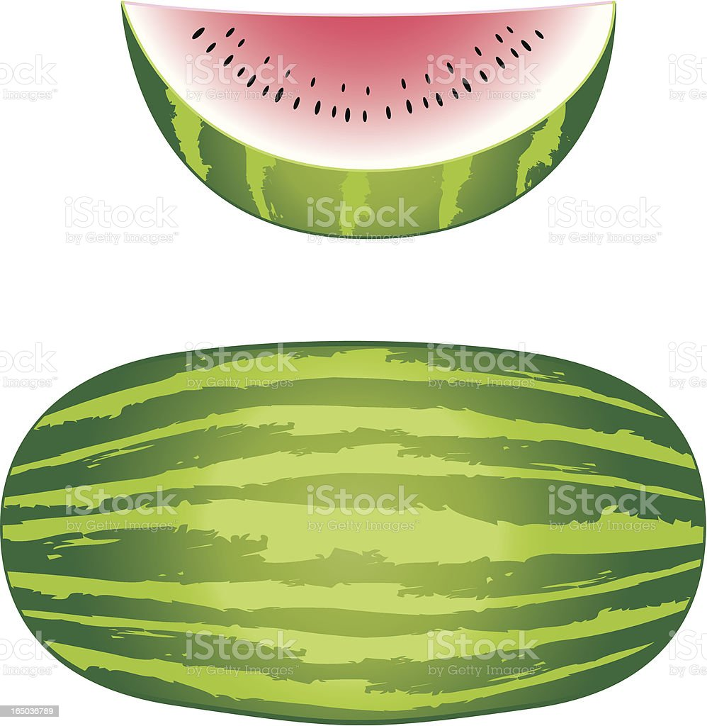 Vector Melon and slice royalty-free stock vector art