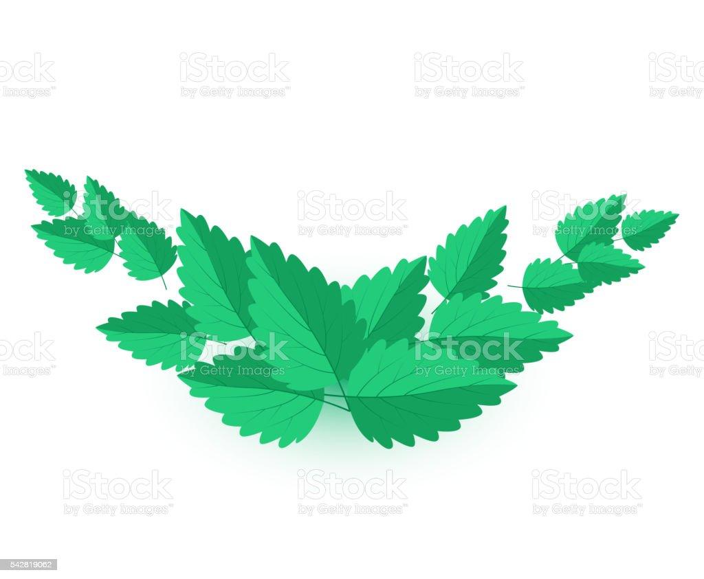 Vector Mint Leaves vector art illustration