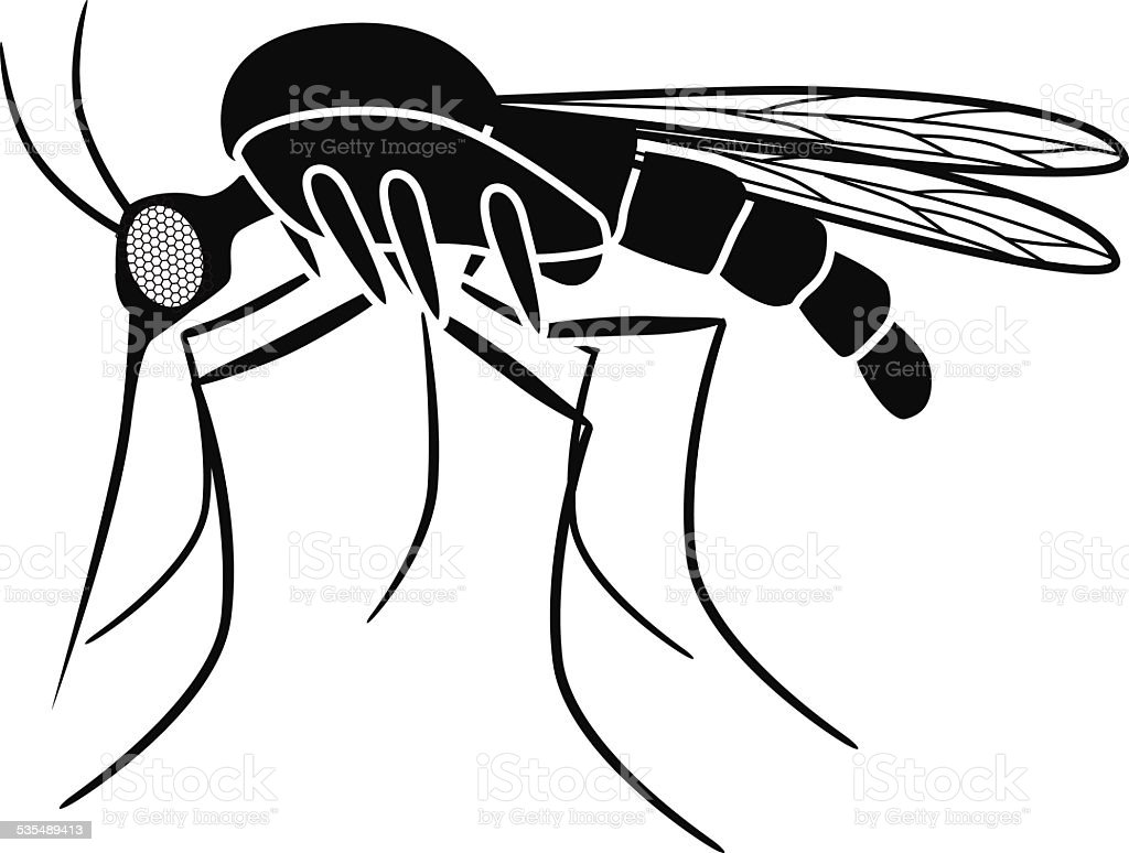 vector mosquito side view in black and white stock vector art