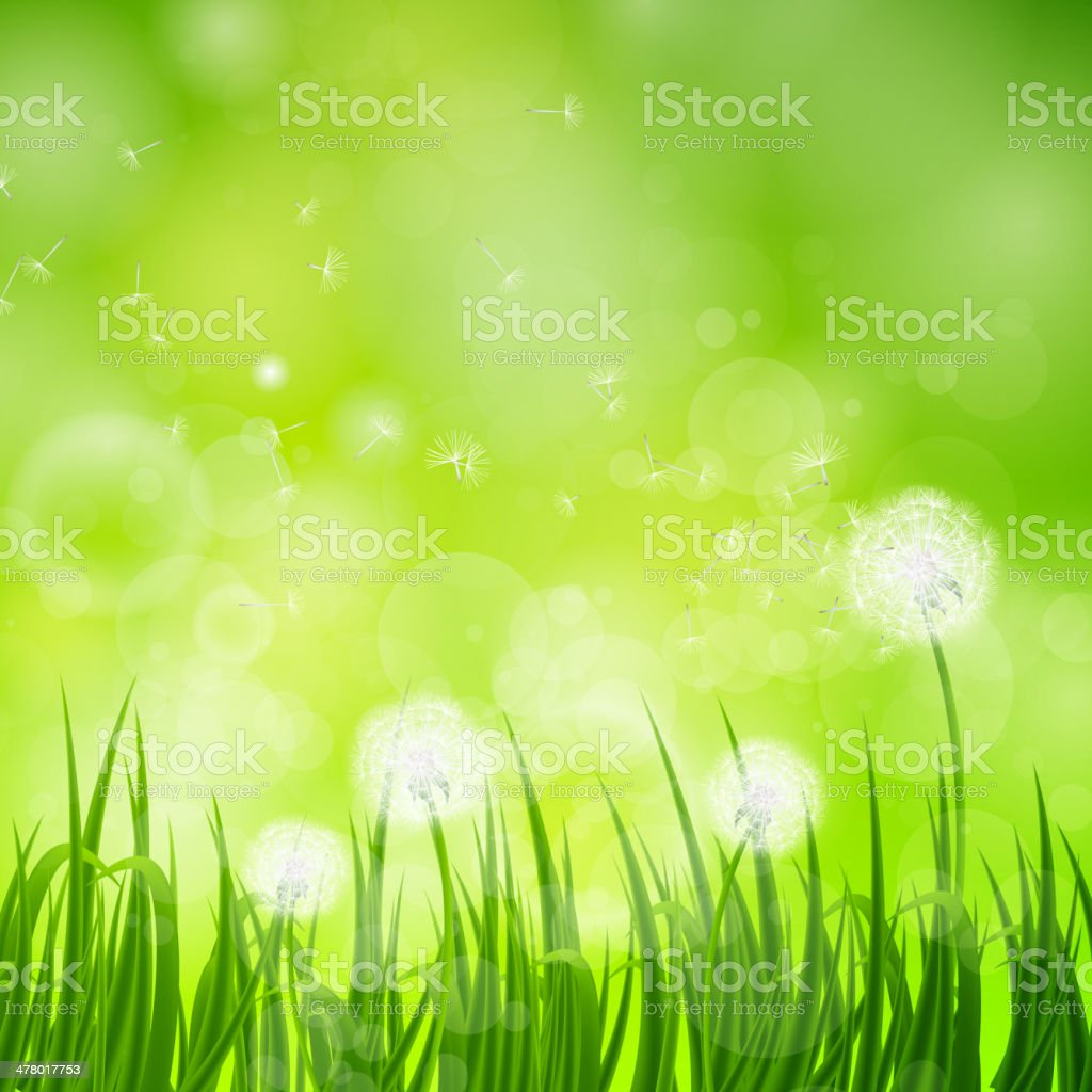 Vector Natural Background with Dandelion royalty-free stock vector art