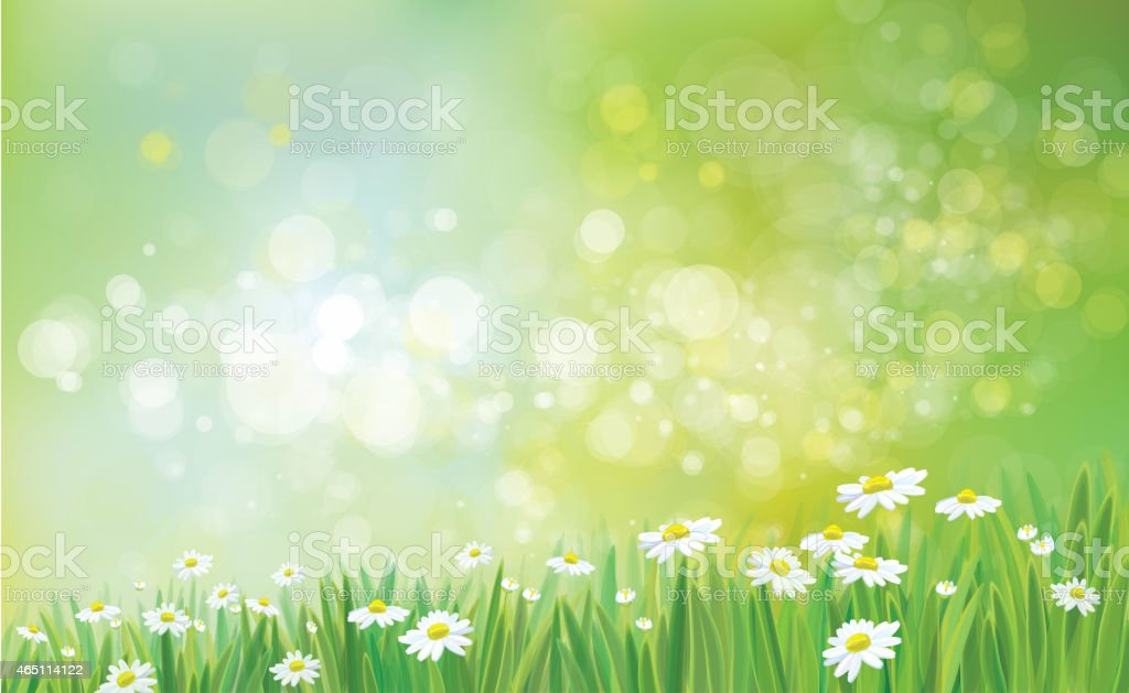 Vector nature background with grass and chamomiles. vector art illustration