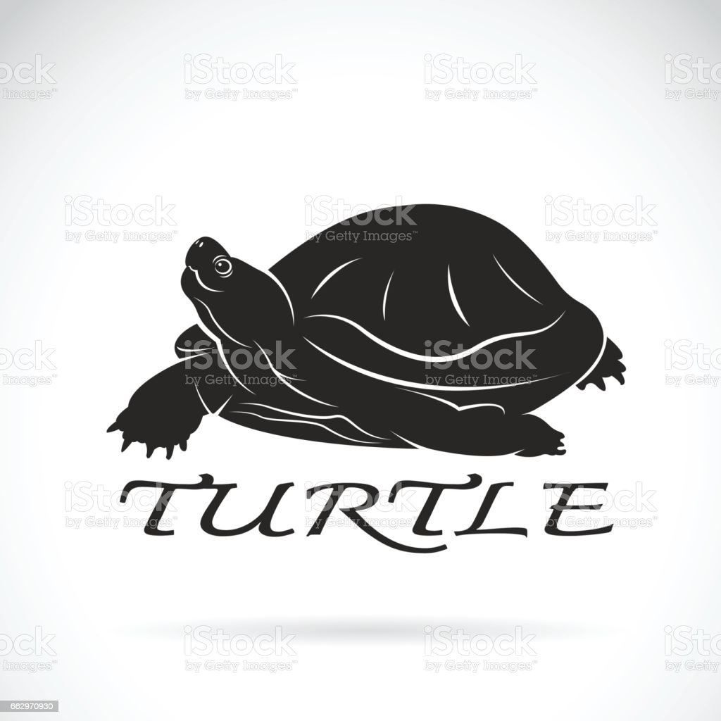 Vector of a turtle on white background. Reptile Animal.