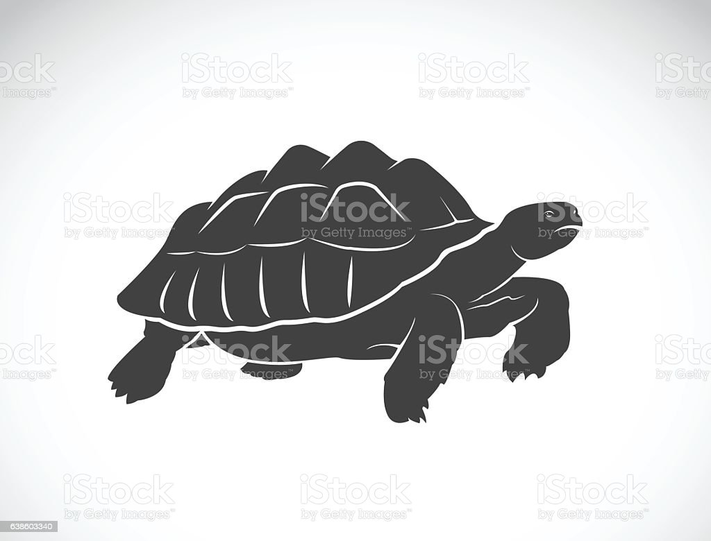 Vector of a turtle on white background. Reptile. Wild Animals.