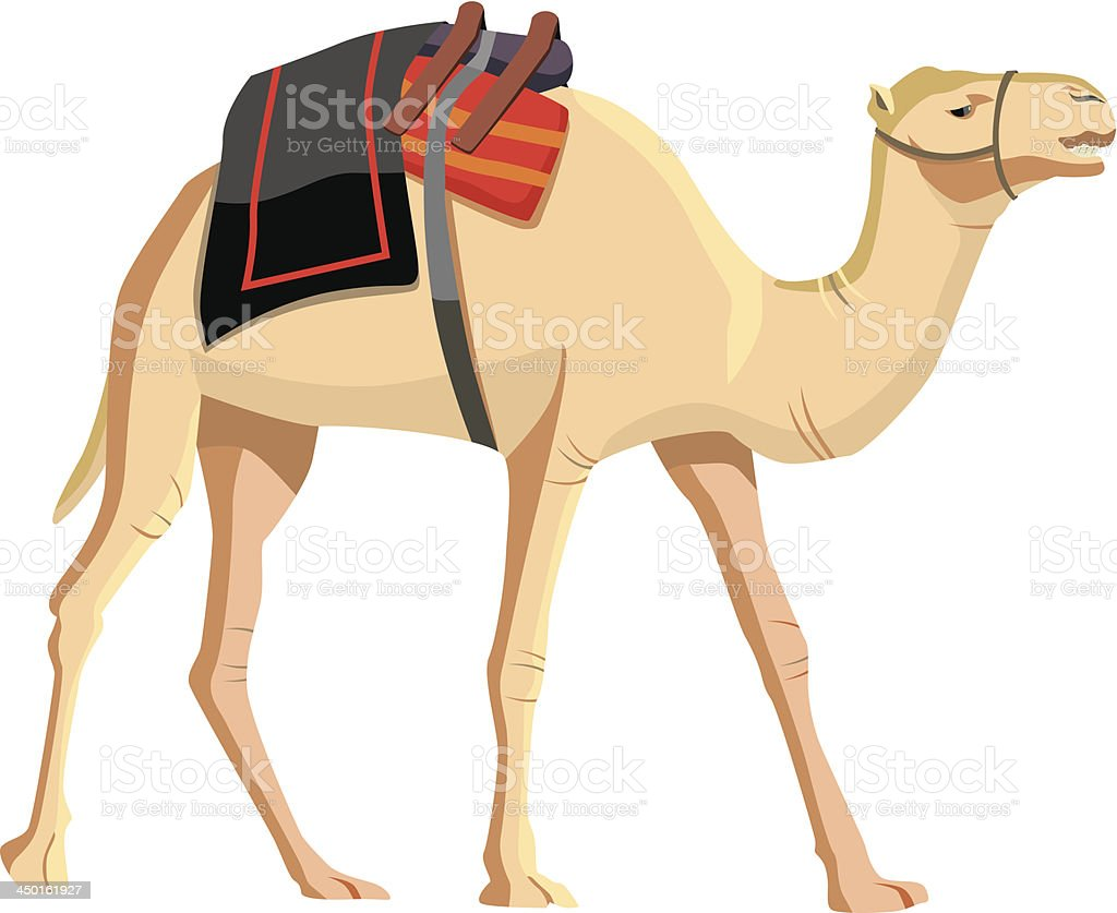 Vector of camel with items on back vector art illustration