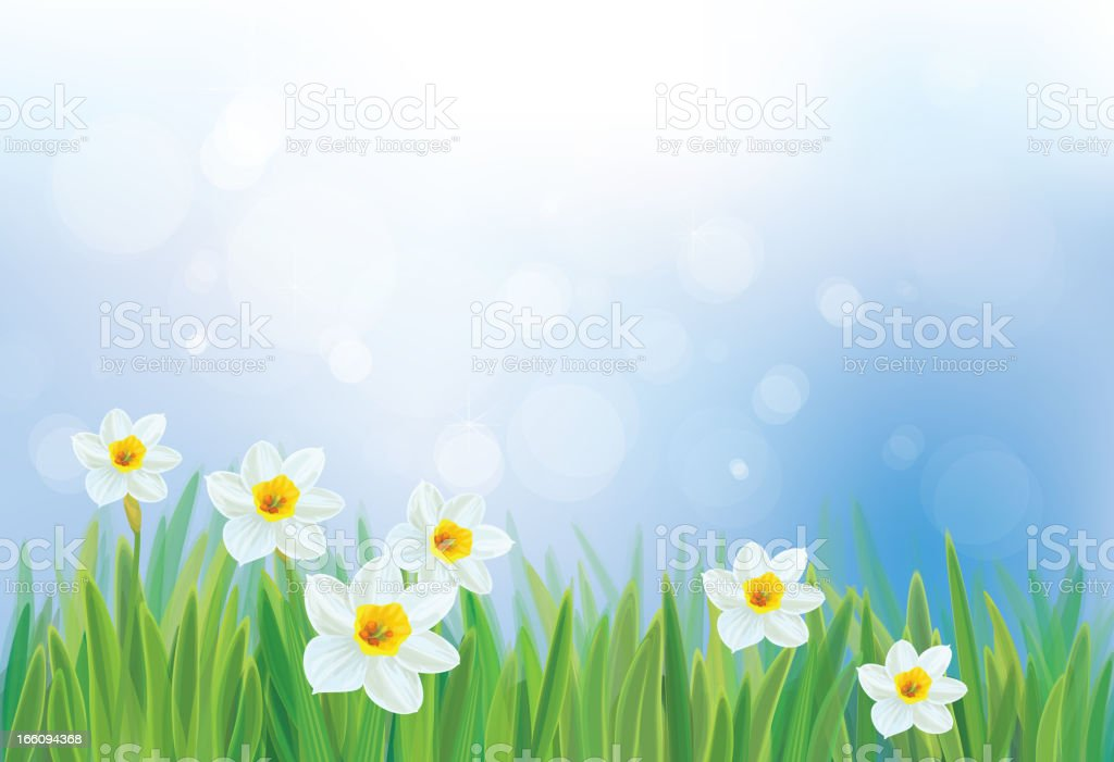 Vector of daffodil flowers on spring background. royalty-free stock vector art