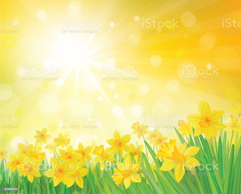 Vector of daffodil flowers on spring, sunny background. royalty-free stock vector art