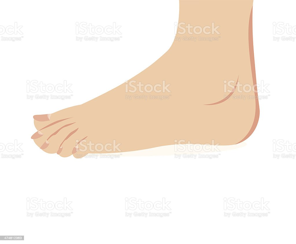 vector of female foot standing royalty-free stock vector art