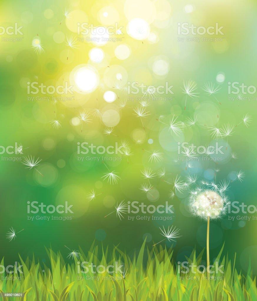 Vector of spring background with white dandelion. vector art illustration