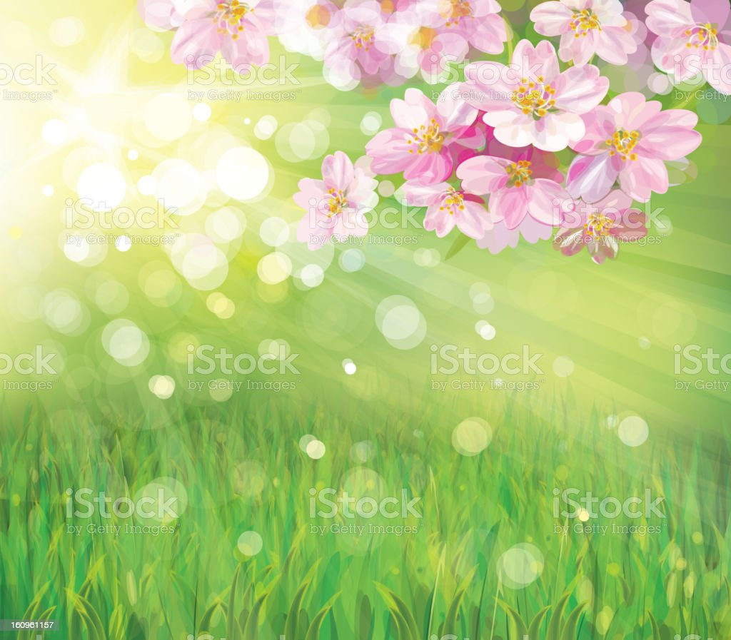 Vector of spring blossoming tree on green background. royalty-free stock photo