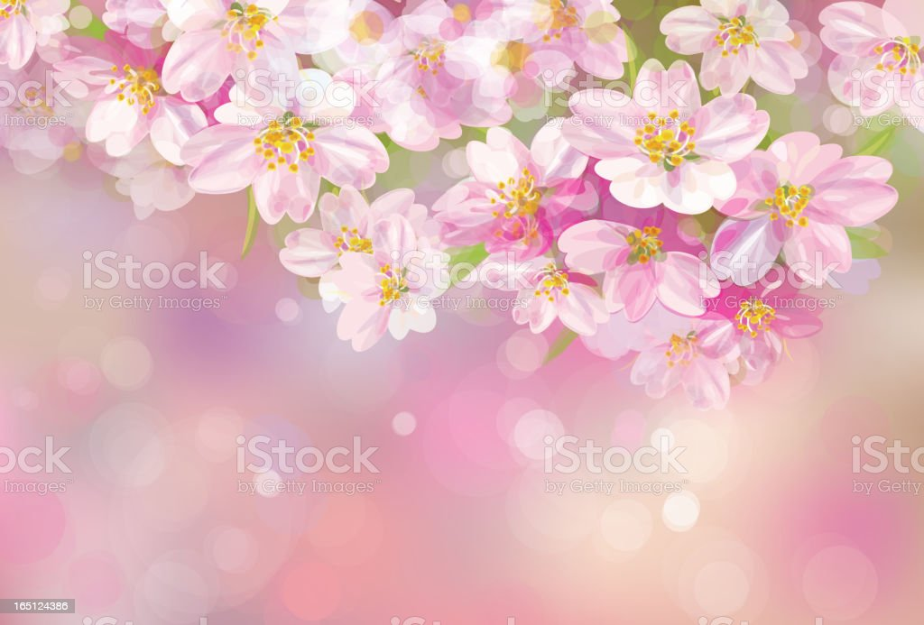 Vector of spring blossoming tree on pink background royalty-free stock vector art