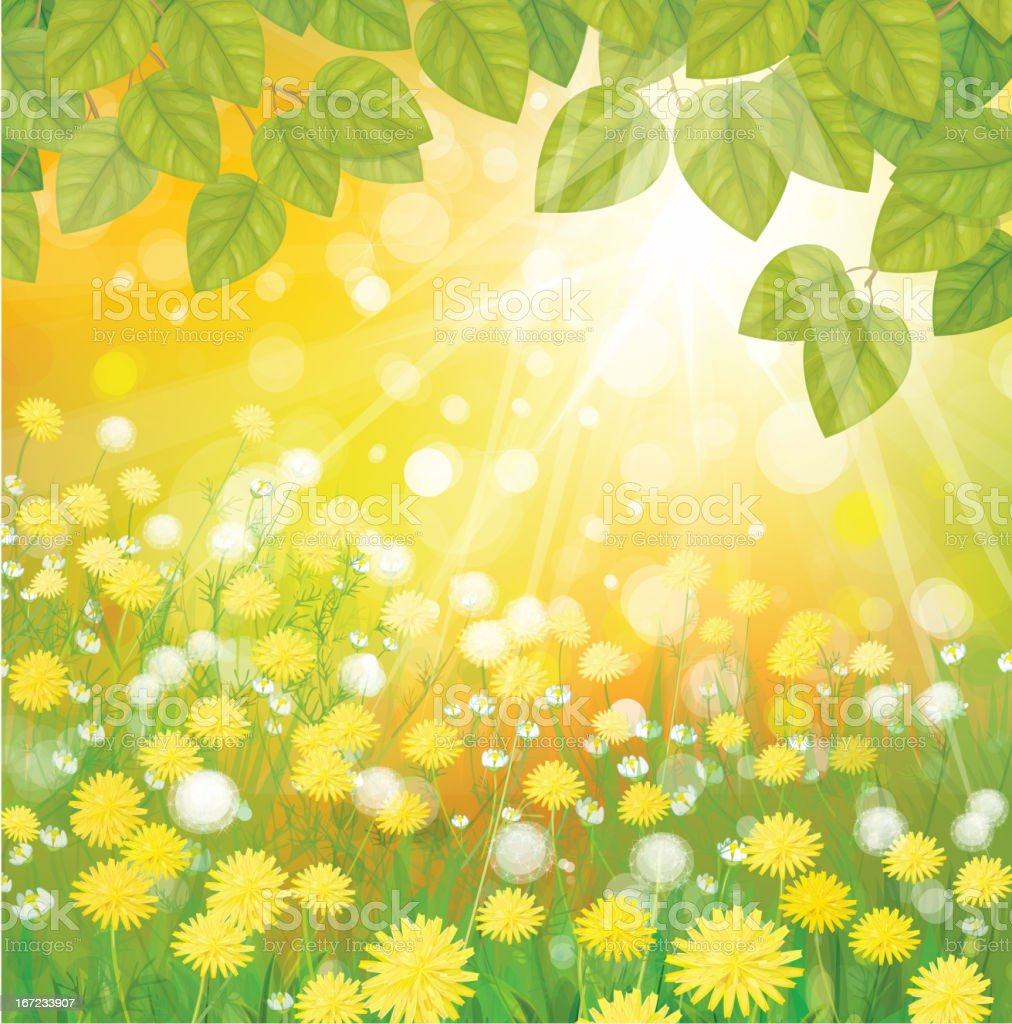 Vector of sunny background with dandelions and green leaves. royalty-free stock vector art