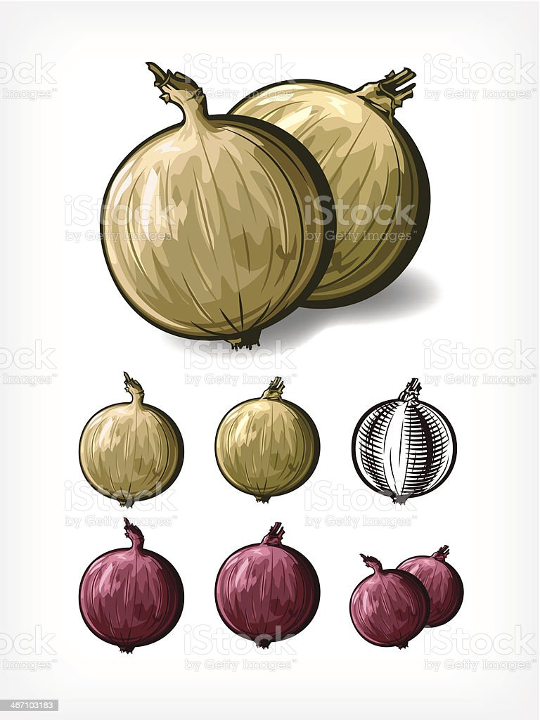 Vector Onions royalty-free stock vector art