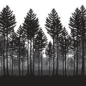 Vector pine forest landscape, dark forest with pine trees