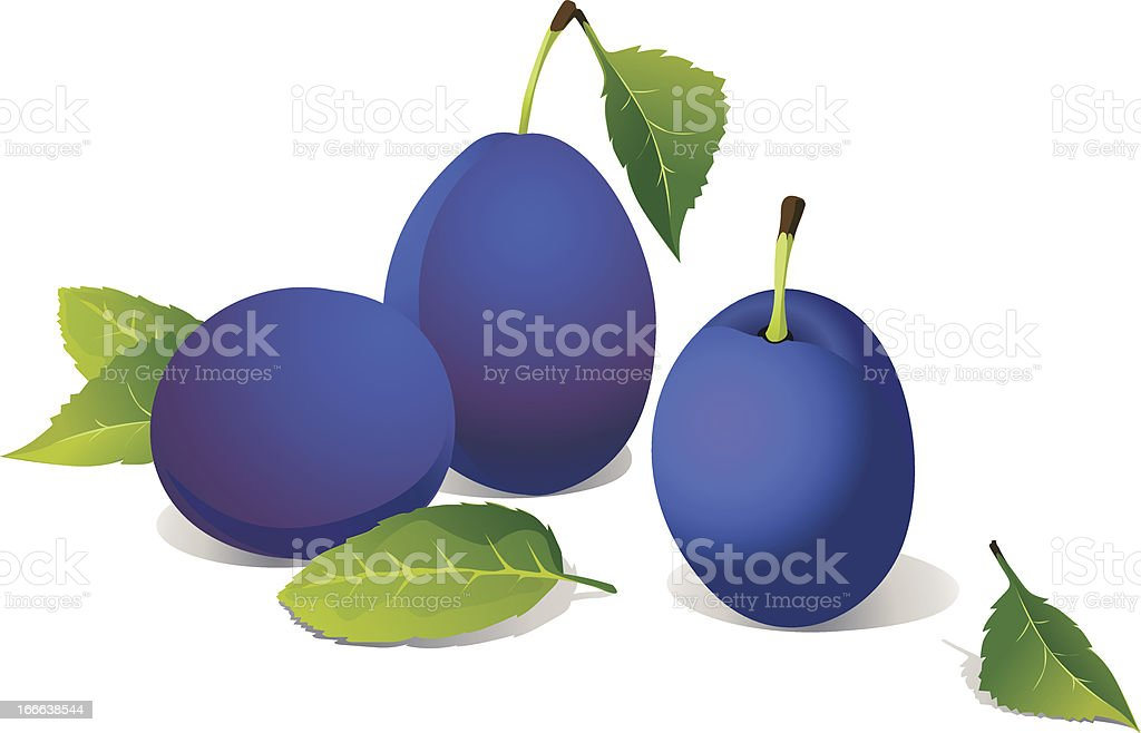 vector plums isolated on white background royalty-free stock vector art