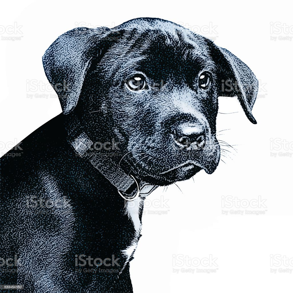 Vector portrait of a cute black puppy vector art illustration