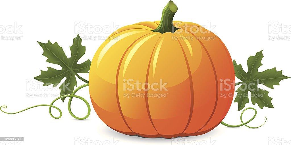 Vector pumpkin illustration on white background vector art illustration