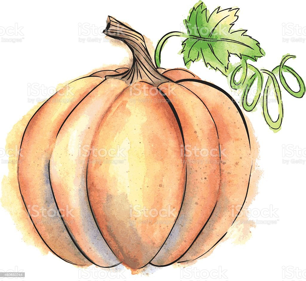 Vector Pumpkin With Watercolor and Ink Elements vector art illustration
