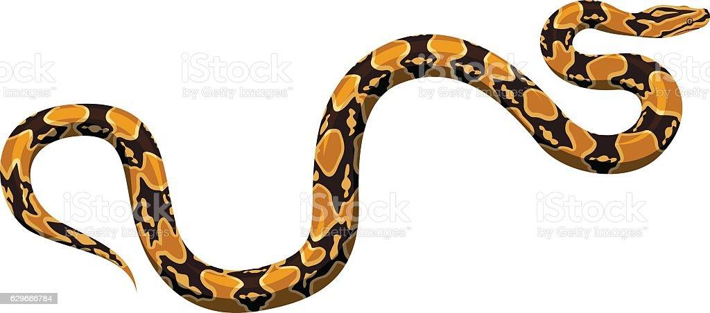 vector python vector art illustration