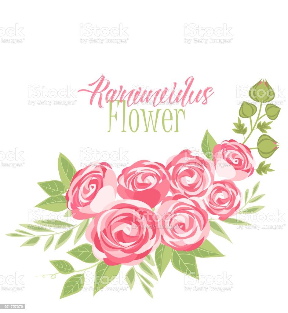 Vector ranunculus flower vector art illustration