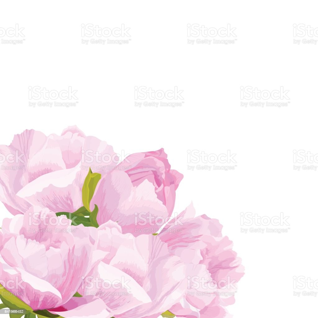 Vector realistic illustration of peony flowers on a white background with clipping mask. Greeting card with place for text. vector art illustration