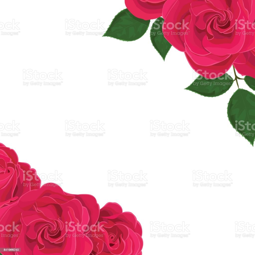 Vector realistic illustration of rose flowers on a white background with clipping mask. Greeting card with place for text. vector art illustration