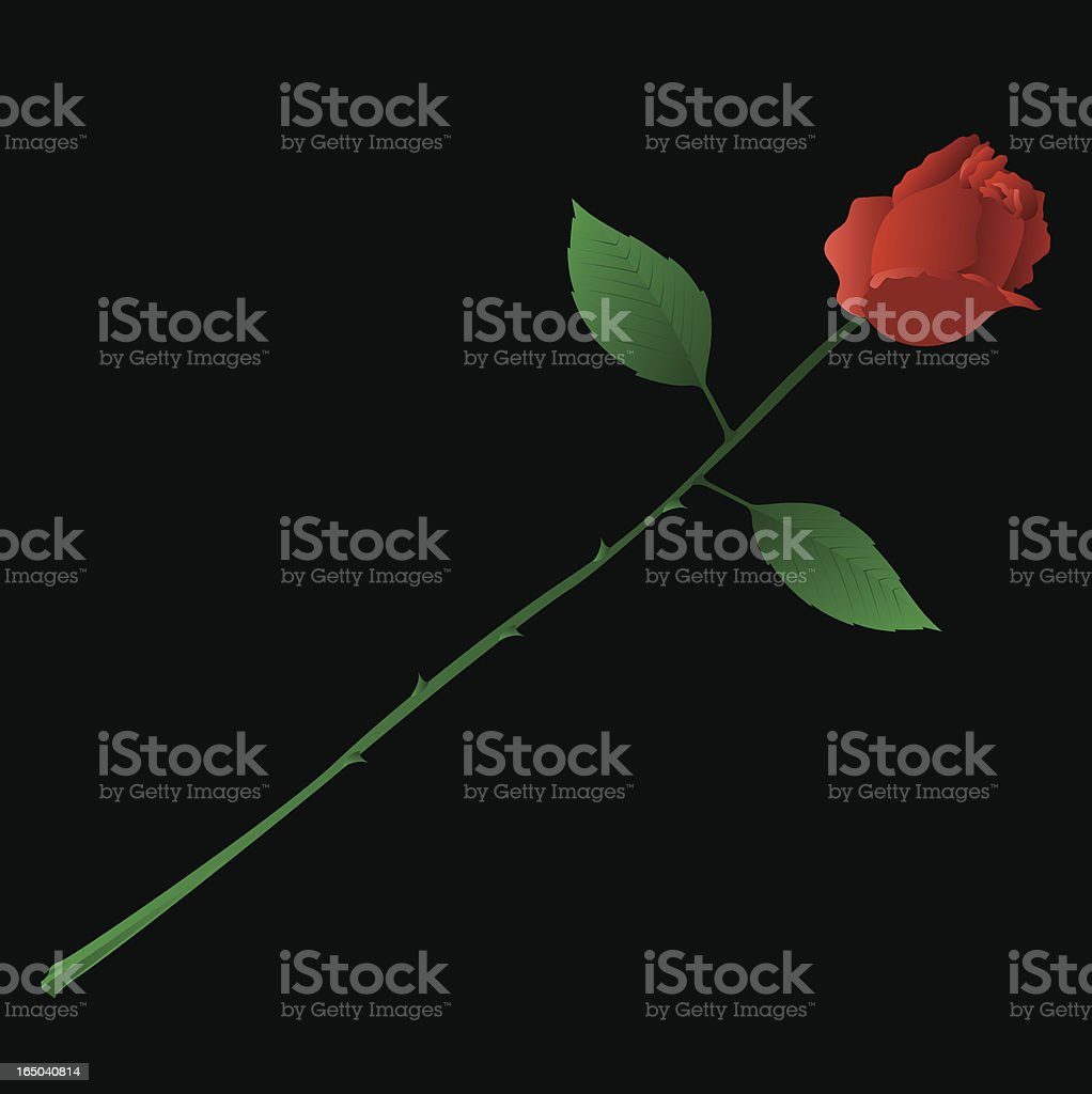 Vector Rose royalty-free stock vector art