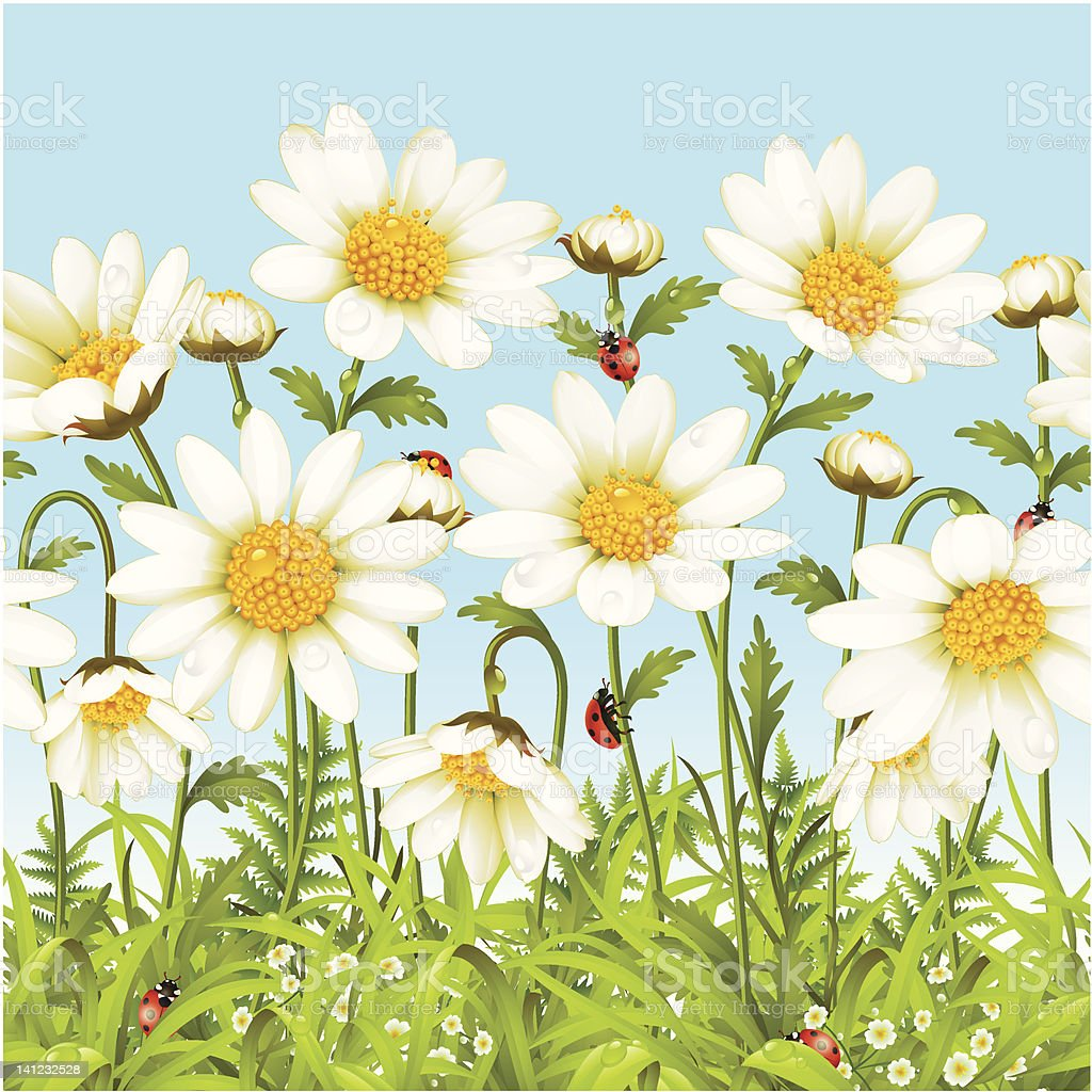 Vector seamless horizontal background with camomile royalty-free stock vector art