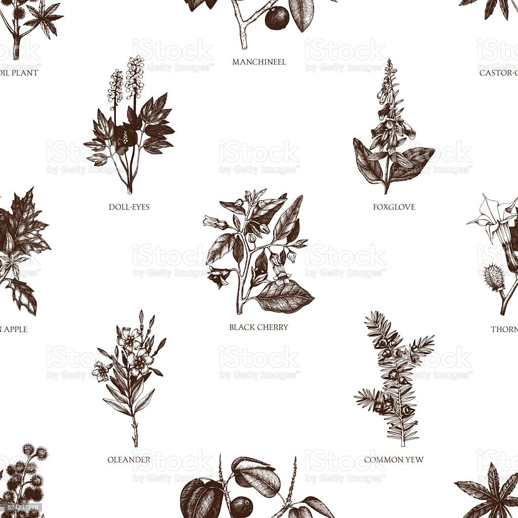 Vector seamless pattern with hand drawn poisonous plants illustration. vector art illustration