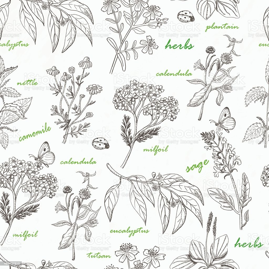 Vector seamless pattern with herbs on a white background vector art illustration