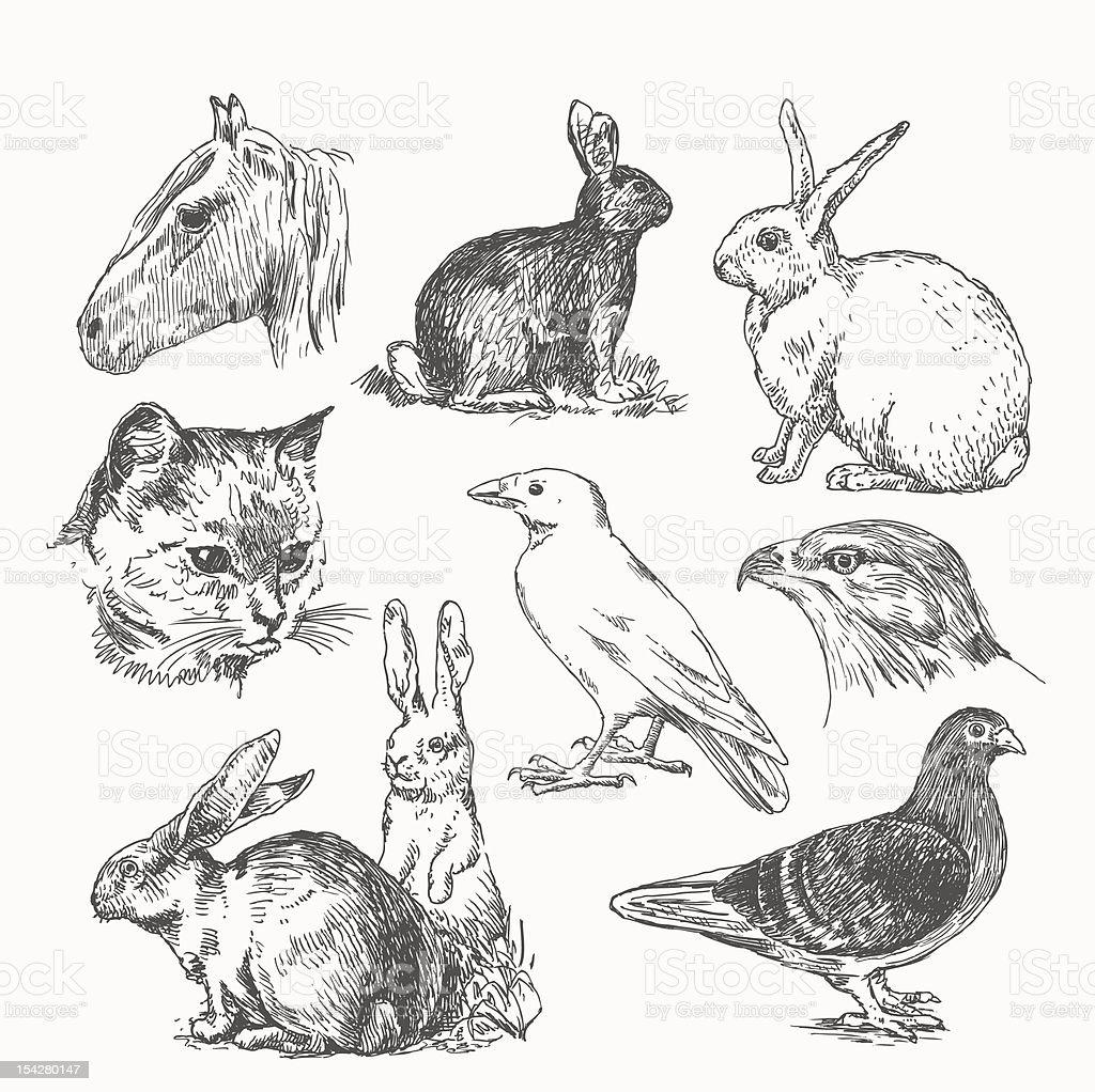 vector set - animals royalty-free stock vector art