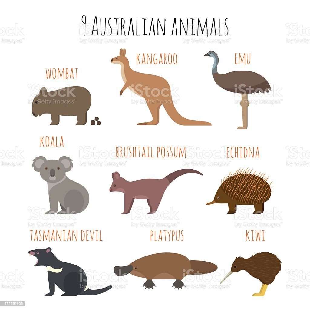 Vector set of Australian animals icons. vector art illustration