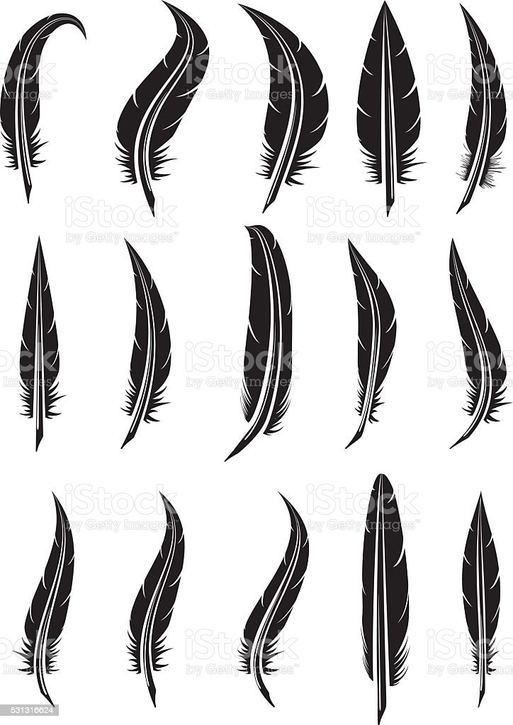 vector set of black and white feathers vector art illustration